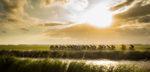 Arensman stapt over naar Sunweb, Inkelaar rouwt om Lambrecht