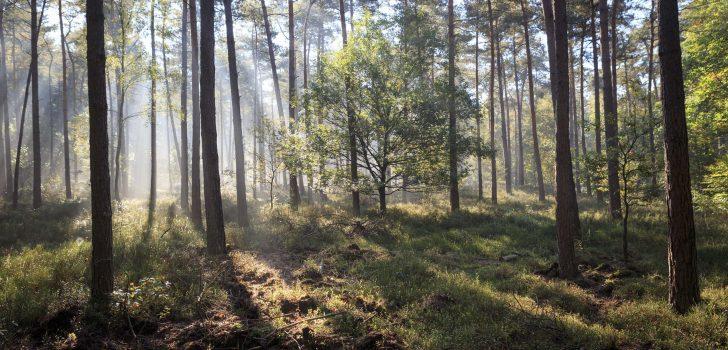 Door de bossen en over de heide van de Veluwe