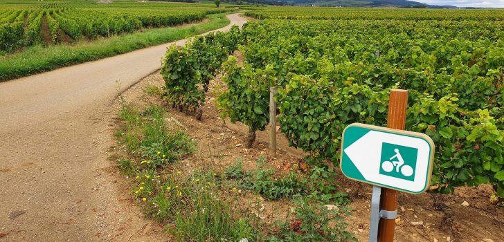 Ontdek Voie des Vignes in de Bourgogne